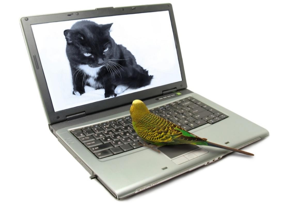 cat & parakeet 1100x790